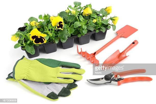 yellow pansy in flowerpot with gardening tools - pruning shears stock photos and pictures
