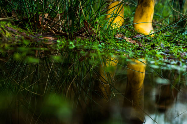yellow rain boots in a puddle
