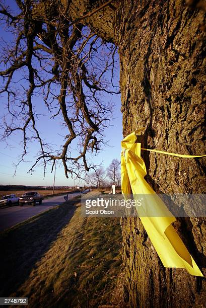 A yellow ribbon hangs from a tree near the home of Chet Borowski November 19 2003 in rural Sharon Wisconsin Borowski put the ribbon on the tree to...