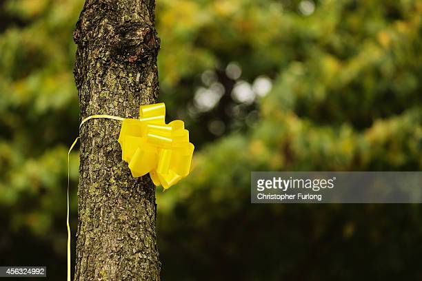 A yellow ribbon is tied to a tree in support of Islamic State hostage Alan Henning on September 29 2014 in Salford England Neighbours of hostage Alan...