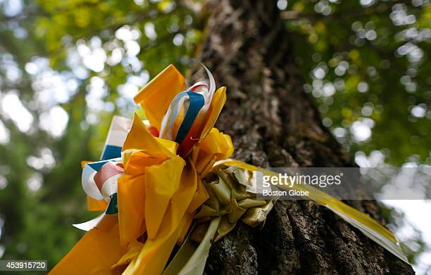 A yellow ribbon is tied to a tree outside of slain journalist James Foley's parent's home in Rochester New Hampshire on August 20 2014