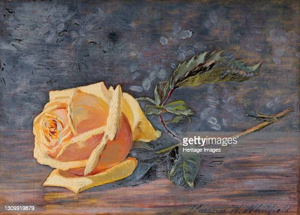 Yellow Rose, 1887. Artist Florence Westwood Whitfield. .
