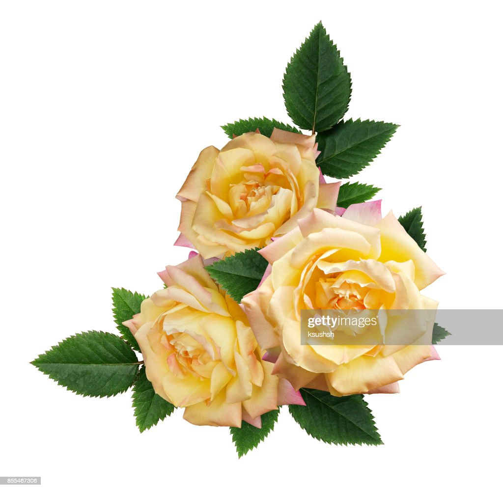 Yellow Rose Flowers Arrangement Stock Photo Getty Images