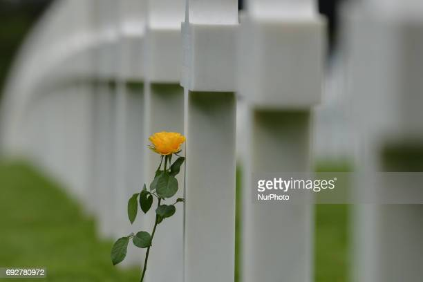 A yellow rose left by visitors at the graves of fallen soldiers at the Normandy American Cemetery that contains the remains of 9387 American military...