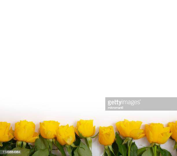 yellow roses - anniversary stock pictures, royalty-free photos & images