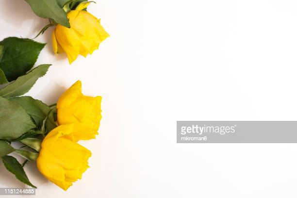 yellow roses - bunch of flowers stock pictures, royalty-free photos & images