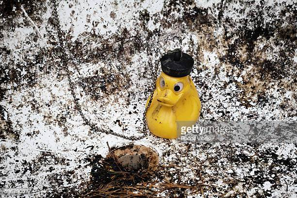 Yellow rubber duck in a dirty and empty bathtub