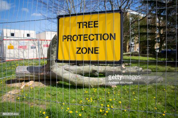 A yellow sign for a Tree Protection Zone fenced off from the public with a recently felled tree inside Norwich Norfolk United Kingdom