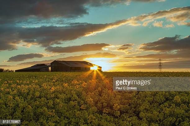yellow sunset - dusk stock pictures, royalty-free photos & images