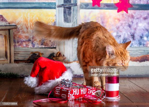 yellow tabby cat explores festive gift wrap and ribbons at christmas time - cat with red hat stock pictures, royalty-free photos & images