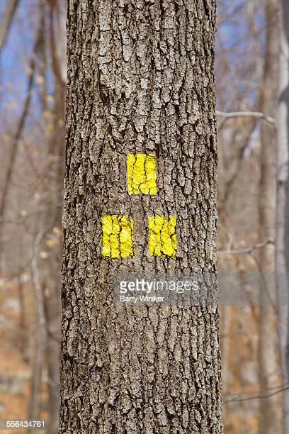 yellow trail markers on tree - トレイル表示 ストックフォトと画像