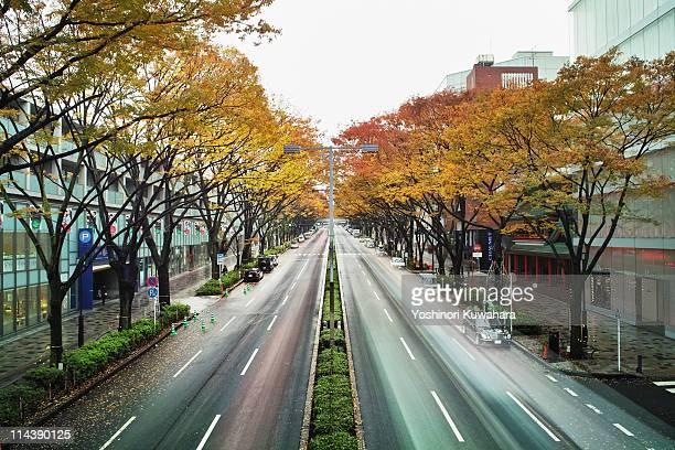 Yellow tree road, omotesando