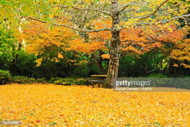 Yellow Trees In Park During Autumn