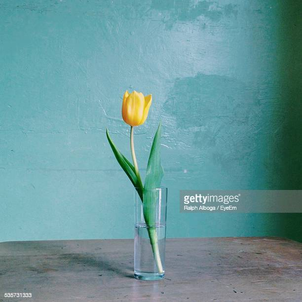 Yellow Tulip In Vase Against Wall