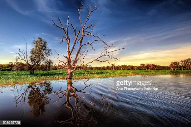 yellow water billabong, wetlands of kakadu, north territory, australia - billabong water stock photos and pictures