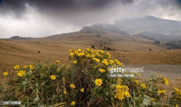 Yellow wildflowers along the hiking trail in Iztaccihuatl-Popocatepetl National Park
