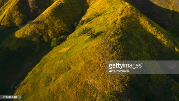 yellow wildflowers blooming in the hills of santa monica mountains, california, usa. aerial photo. - calabasas stock pictures, royalty-free photos & images