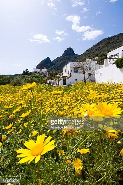 yellow wildflowers by houses on coast - isole eolie foto e immagini stock