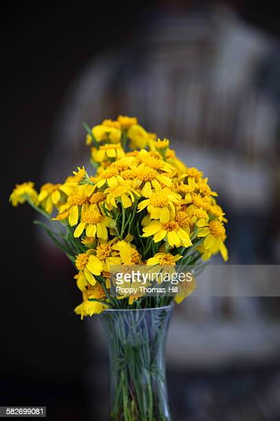 yellow wildflowers in a vase - utah wedding stock pictures, royalty-free photos & images