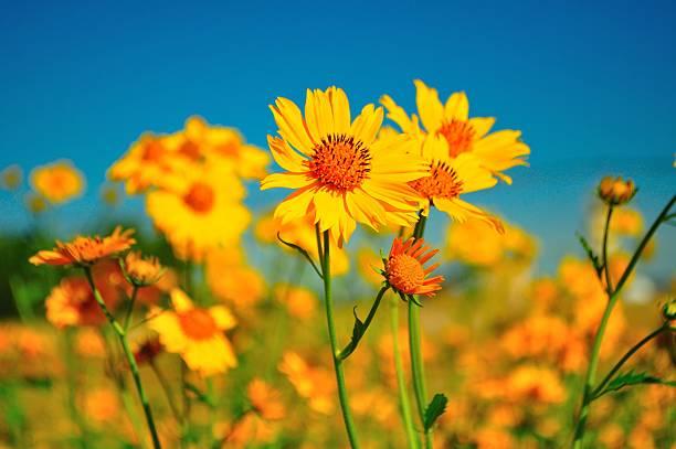 Yellow wildflowers photos yellow wildflowers wall art photo id 134237660 mightylinksfo
