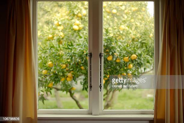 yellow window - photographed through window stock pictures, royalty-free photos & images