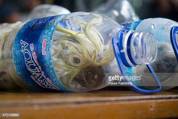 Yellowcrested cockatoo inserted in empty water bottles for illegal trade are shown by police officials at Port of Tanjung Perak on May 4 2015 in...
