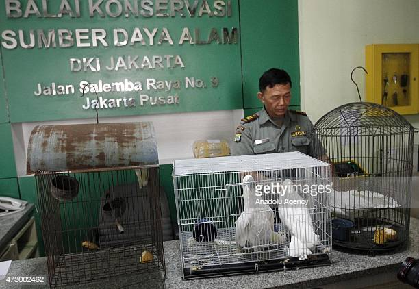 Yellowcrested cockatoos are seen in cages after being handed in by citizens at the Natural Resources Conservation Center office in Jakarta Indonesia...