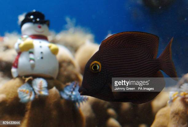 60 Top Christmas Tree Worms At London Zoo Pictures Photos Images
