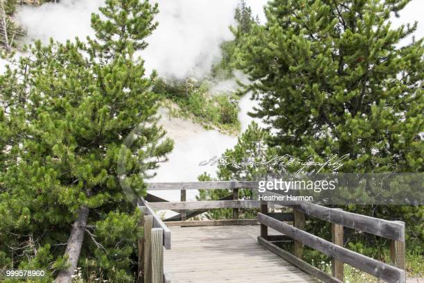 yellowstone geysers - heather harmon fotografías e imágenes de stock