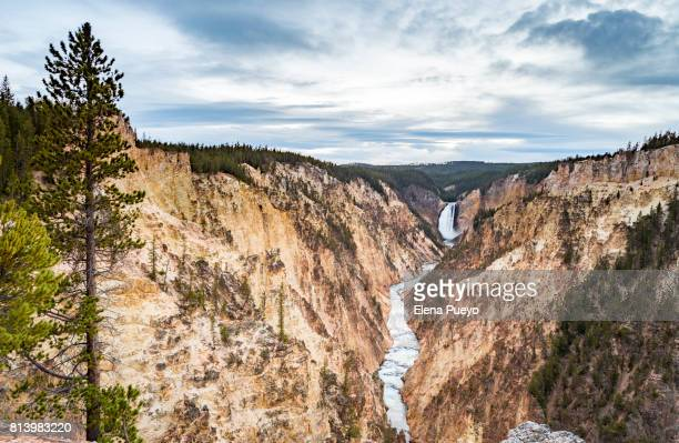 yellowstone grand canyon, usa - yellowstone river stock photos and pictures