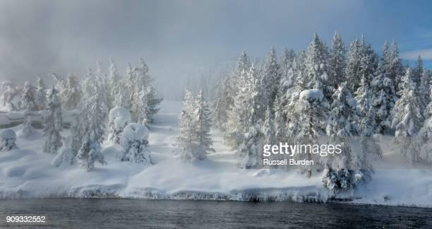 Yellowstone In Winter