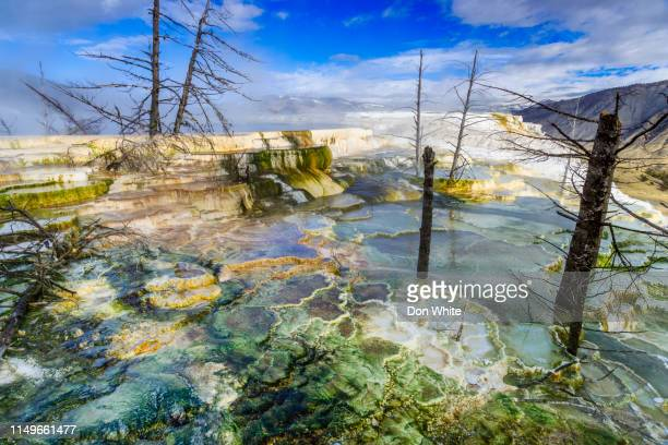 yellowstone national park in wyoming - caldera stock pictures, royalty-free photos & images