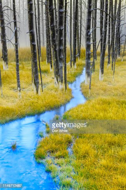 yellowstone national park in wyoming - rocky mountains north america stock pictures, royalty-free photos & images
