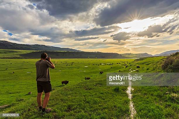 USA, Yellowstone National Park, Man photographing herd of buffaloes in Lamar Valley