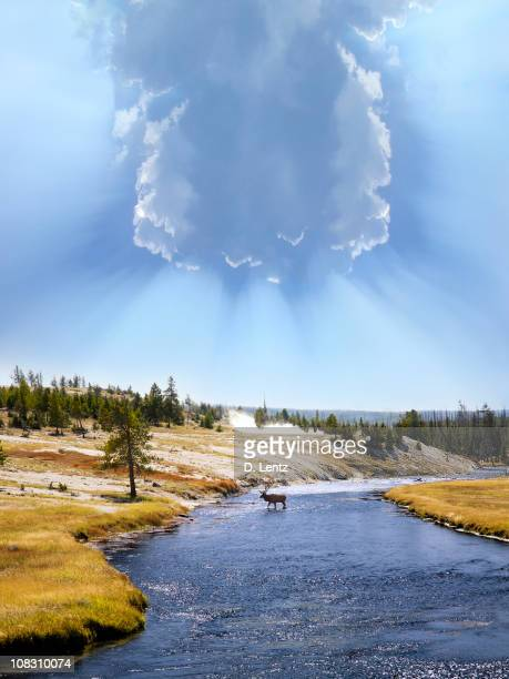 yellowstone national park - yellowstone river stock photos and pictures