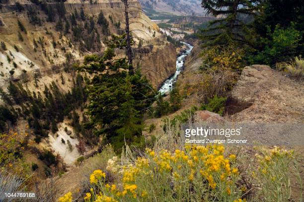 yellowstone national park, wyoming, usa, united states of america - state stock pictures, royalty-free photos & images