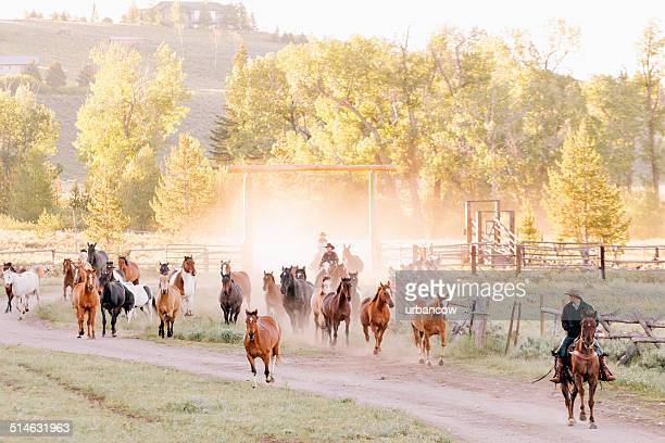 yellowstone ranchers - ranch stock pictures, royalty-free photos & images