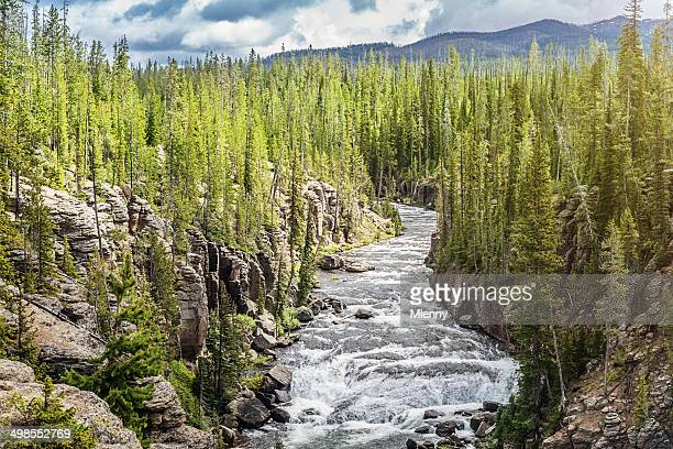 yellowstone river national park usa - mlenny stock pictures, royalty-free photos & images
