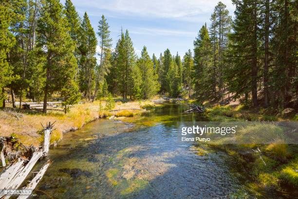 yellowstone river - yellowstone river stock photos and pictures