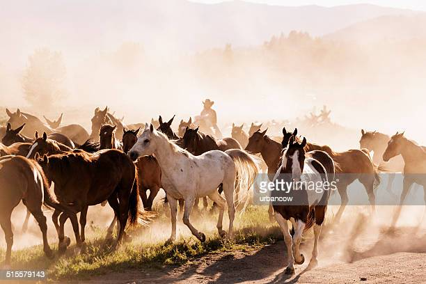 yellowstone wrangler - stampeding stock pictures, royalty-free photos & images
