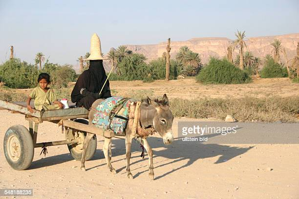 Yemen female farm worker in typical Wadi Hadramaut style costume with big straw hat on a donkey cart