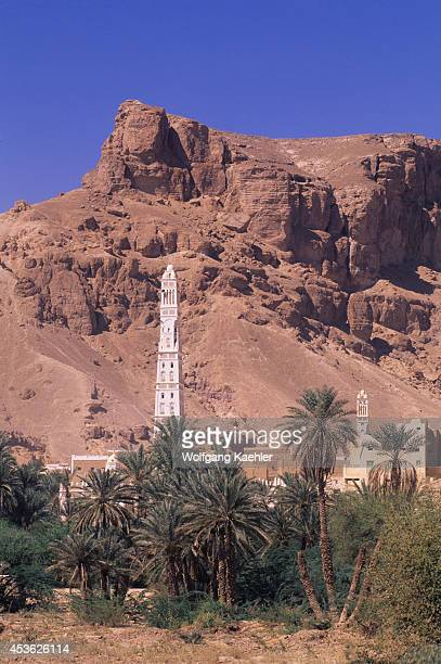 Yemen Wadi Hadramawt Tarim Palm Trees With Minaret