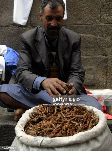 Yemeni man sells fried grasshoppers on July 23 2014 in Sana Yemen Grasshoppers invade in Sana become a opportunity for Yemeni farmers to make profit...