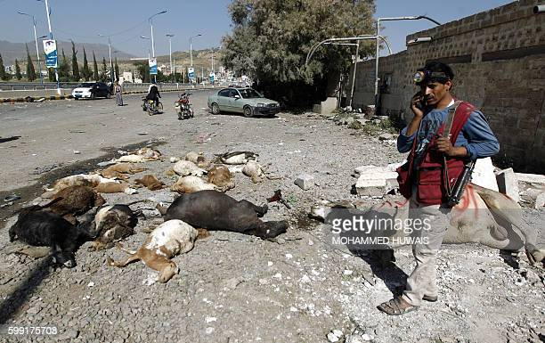 A Yemeni man stands near dead animals following a reported airstrike by Saudiled coalition airplanes in the capital Sanaa on September 4 2016 The...
