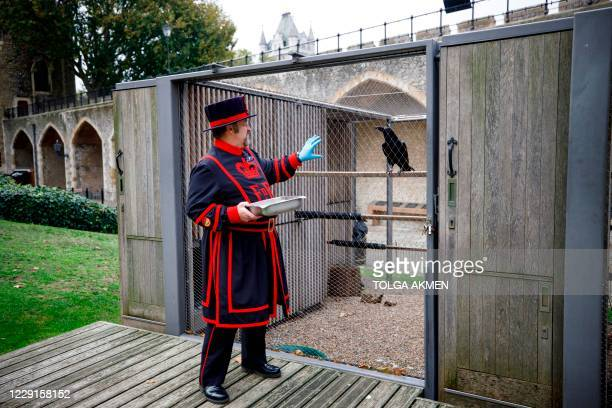 Yeoman Warder Ravenmaster Chris Skaife feeds the ravens at the Tower of London in central London on October 12, 2020. - Chris Skaife has one of the...
