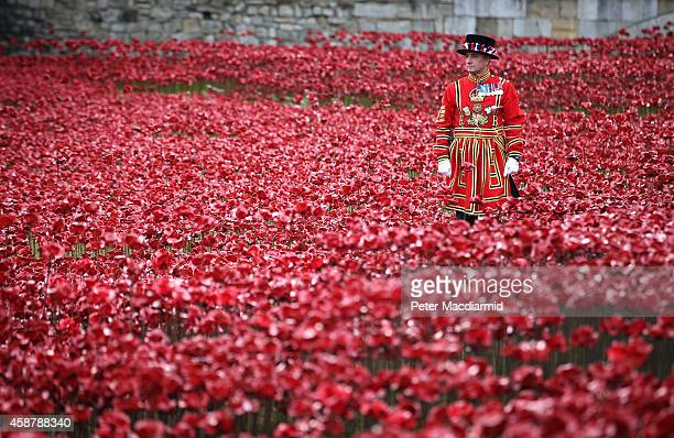 Yeomen Warder awaits the placing of the last ceramic poppy in the moat of Tower of London to mark Armistice Day on November 11 2014 in London England...