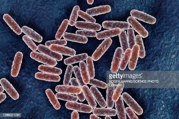 yersinia pestis bacteria, illustration - bubonic plague stock pictures, royalty-free photos & images