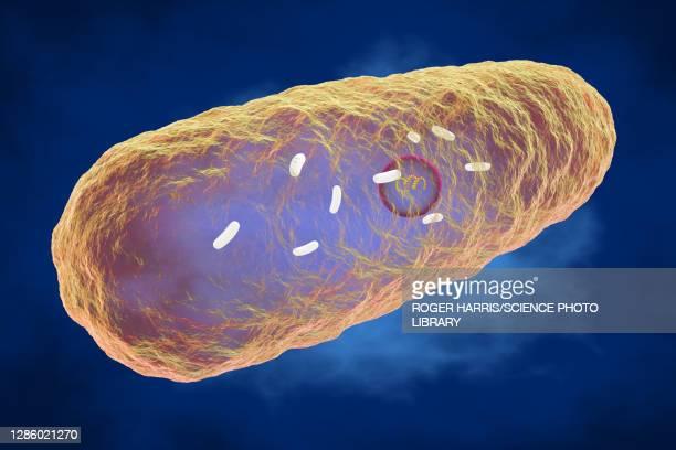 yersinia pestis bacterium, illustration - bubonic plague stock pictures, royalty-free photos & images