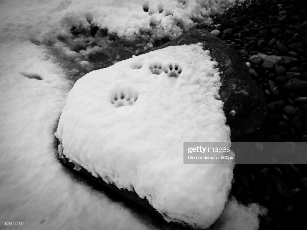 Yeti Prints Stock Photo - Getty Images