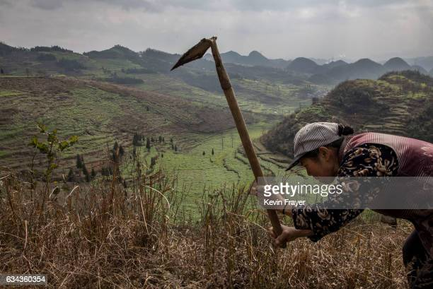 Yi villager works after Tiaohua or Flower Festival as part of the Lunar New Year on February 7 2017 overlooking the Long Horn Miao area of Longga...